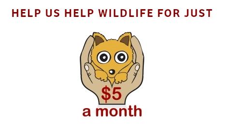 $5 a month Facebook